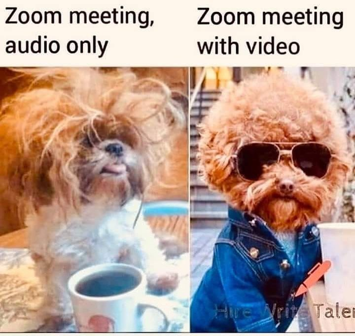 Meme about zoom meeting with and without audio